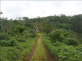 Road outside Leitouapam, Tanna.: by thomasz, Views[81]