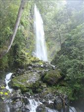 Whisky falls, Nelson lakes NP: by thomasz, Views[46]