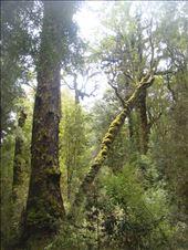 Primeval forest, Oparara Basin: by thomasz, Views[20]