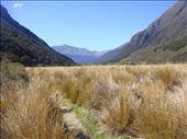 Tussock, Caples - Greenstone track: by thomasz, Views[44]