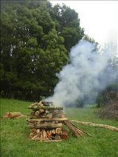 Making a hangi (ground oven), Avonstour: by thomasz, Views[15]
