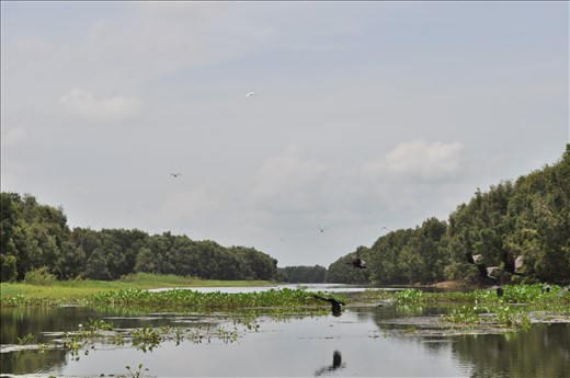 The value of biodiversity and tourism of Tram Chim National Park, Vietnam