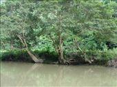 Biodiversity value of Babe National Park: by thuynguyen, Views[84]