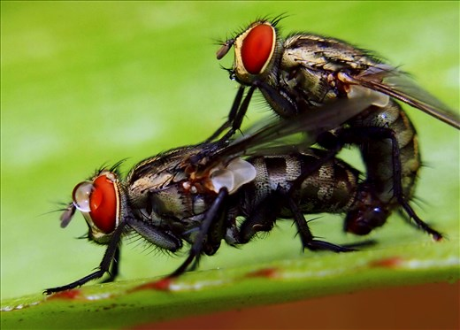 Flies can be difficult to capture. But these two