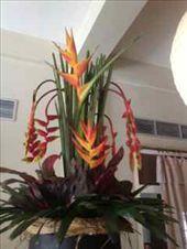 Flowers everywhere!!!: by tiffany3939, Views[133]
