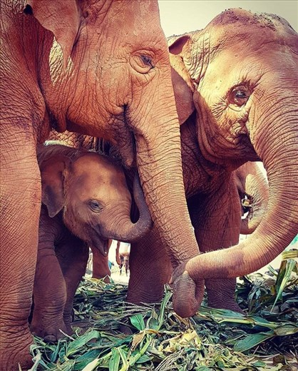 Family Time.