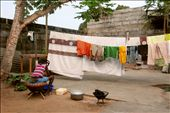 A girl handwashing clothes in the courtyard.: by tiph, Views[238]