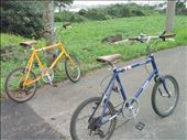 His and hers for getting around the island: by tjietjie, Views[177]