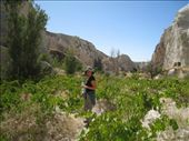 Walking through the wild grapes (and eating quite a few along the way) in Cappdocia.: by tk-tempany, Views[438]