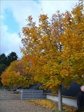 Autumn colours: by tk_inks, Views[250]