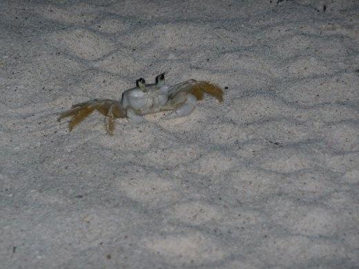 Crab on Tulum Beach