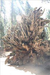 Mariposa Grove: by tk_inks, Views[146]