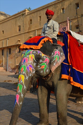 A beautifully painted elephant in Jaipur.