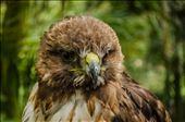mighty bird 1: by tonatiuh, Views[111]