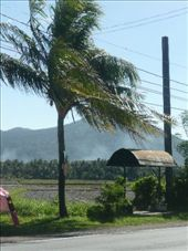 Our view at the front of the centre. Rice paddies and Mountain McKillin.: by tonielle_krisanski, Views[252]