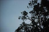 Proboscis Monkey: by toomanyllamas, Views[123]