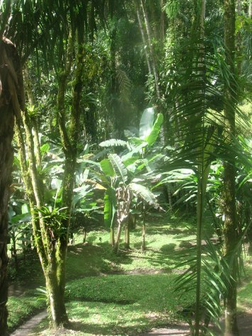 Rainforest near San Vito, i was more interested in getting a decent pasta though