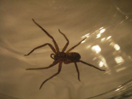 Fucking big ass spider in my fucking bathroom -
