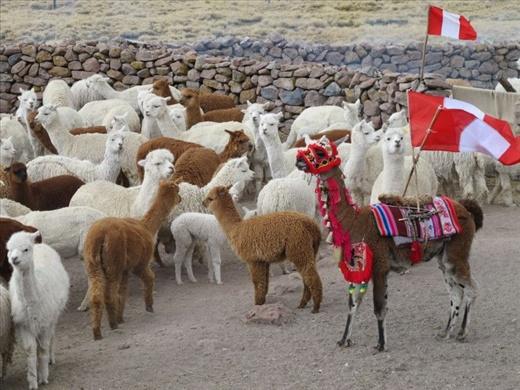 A Nomad Knows: Peru