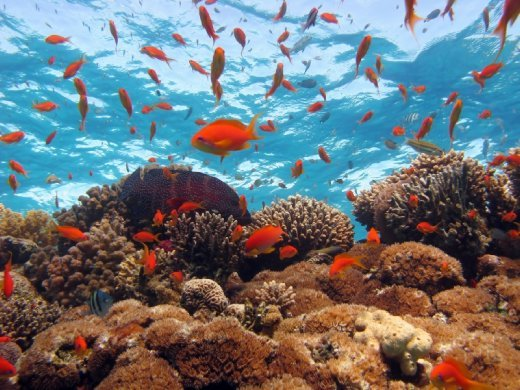 Explore Egypt's Red Sea