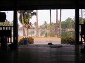 vue sur le parc du centre de massage: by travelling_chouchi, Views[153]