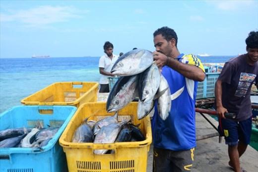 Sustainable tuna fishing in Maldives