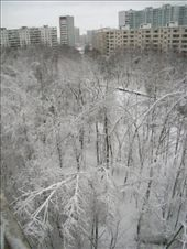 Snow covered park in Moscow!!: by treefrog, Views[53]
