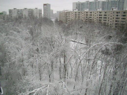 View from my window of the snow covered park