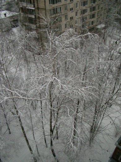 The snow covered trees in the park in front of my apartment
