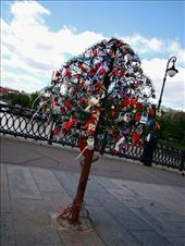 "One of the metal lock covered trees on ""Love Bridge"".: by treefrog, Views[192]"