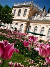 The palace gardens are filled with colourful Tulips: by treefrog, Views[137]
