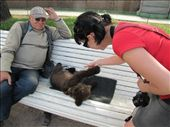 I got to touch and pet the bear cub named Lubaba.: by treefrog, Views[56]
