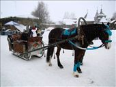 You could go on horse carriage rides through the town: by treefrog, Views[2010]