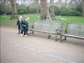 The great squirrel hunt in St James Park, London: by tregenza_family, Views[172]