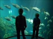 The stairwell and lift leaving the aquarium go through the main tank: by tregenza_family, Views[222]