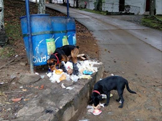 Kadun koirakaverit Kolumbian Calissa.