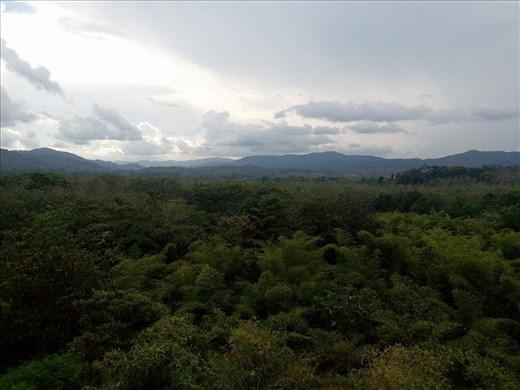 Panamalaista sademetsää silmien kantamattomiin.