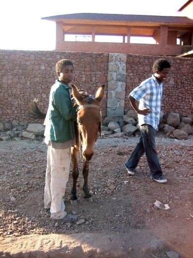 My mule boy & tour guide to the top of Ashetan Maryam