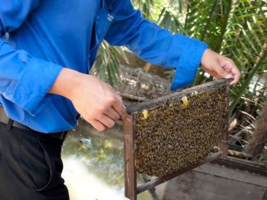 Beekeeping to make honey tea