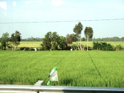Views of rice paddys from the bus