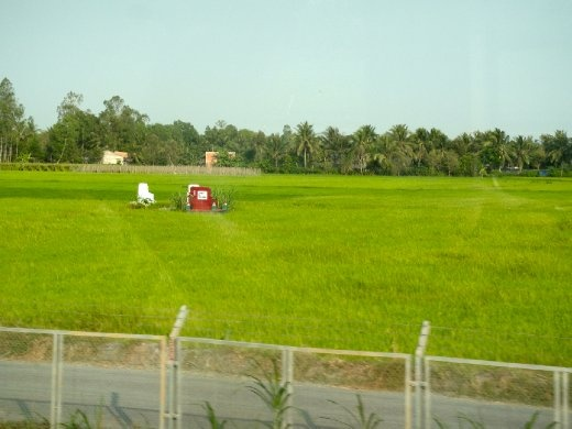Tombstones are scattered throughout the rice fields