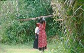Hauling away illegally harvested timber: by ugandaretrospective, Views[185]