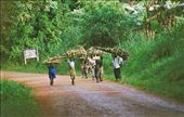 Illegal wood harvesting - right in our backyard!: by ugandaretrospective, Views[701]