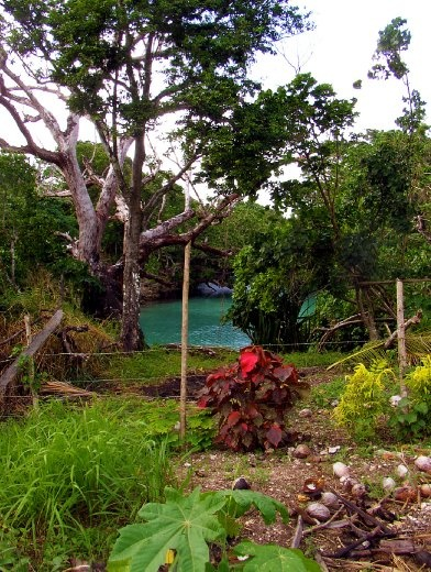 a typical personal vegetable garden. I appears in Vanuatu, the simpler the life, the better. Travelling around the villages. I came upon these wonderful people that allowed me to walk around the privacy of their humble dwelling and land; I felt in paradise.