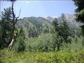 picture chosen from dense forests of gagangeer valley .: by universal, Views[128]