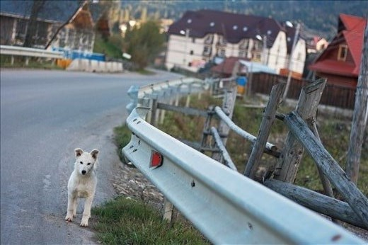 I fell in love with this little white friend who was following me during my way to Bukovel' mountains.So many happiness in such small fluffy