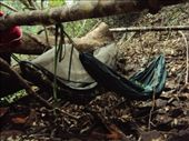 sleeping in hammocks in the jungle: by utegute, Views[801]