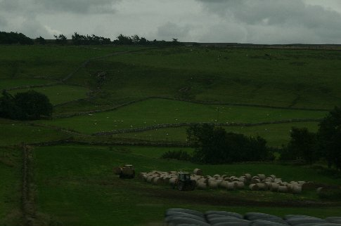 More stone walls in another bucolic scene (except for the rain)