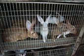 Les lapins, St. Martin de Vers: by vagabonds, Views[437]