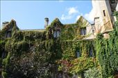 English ivy, Bailol College, Oxford: by vagabonds, Views[1213]